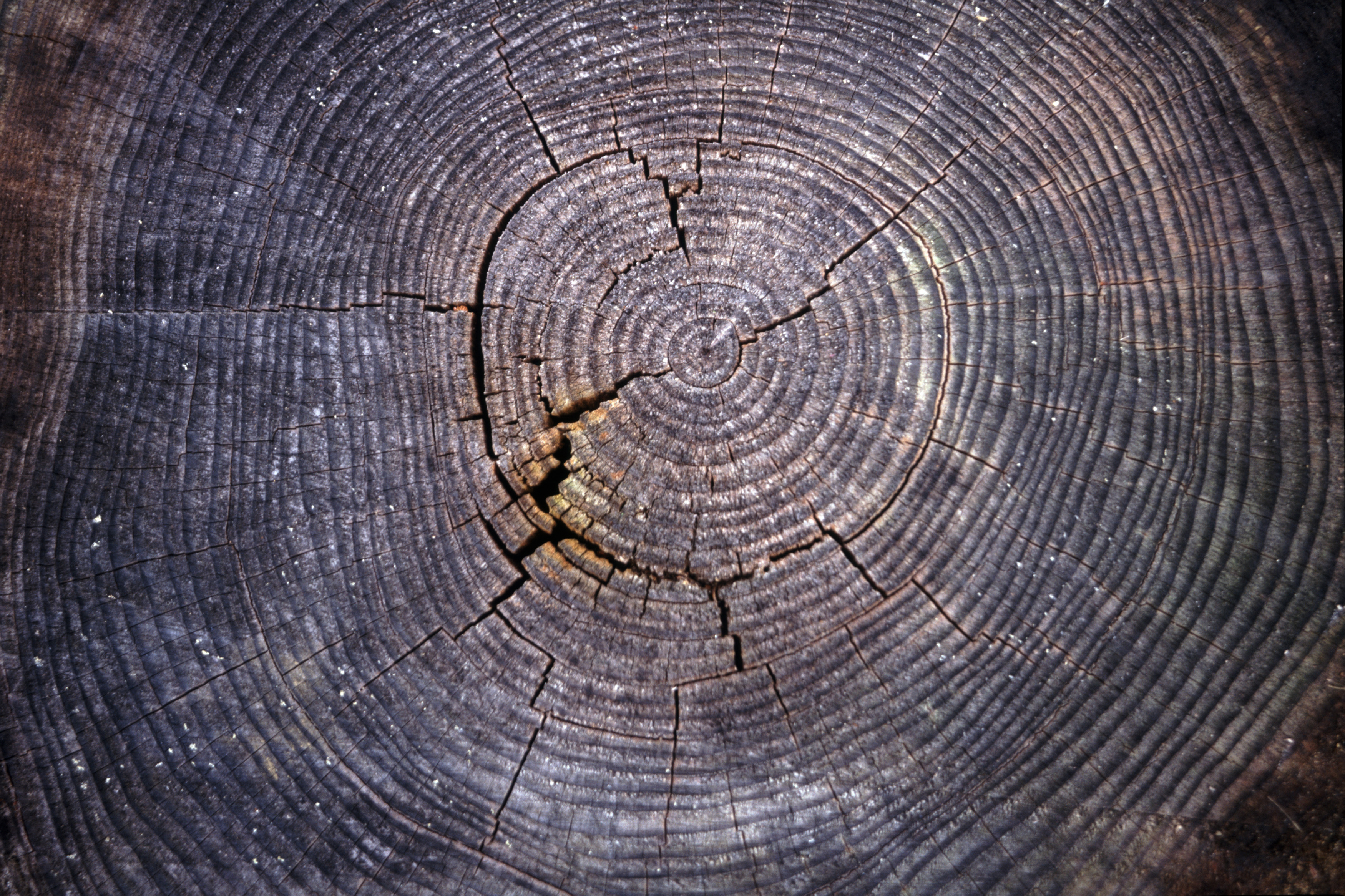 Symbol stromu ukazuje osobnostní růst. Kam patříme, odkud pocházíme a kam směřujeme.