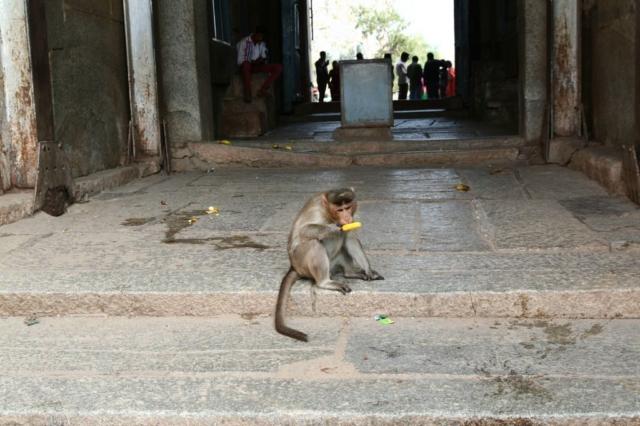 Opice má nanuk. Jsou tam velmi drzé