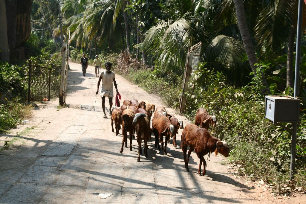 Hampi nejsou jen turisté, ale i místní lidé