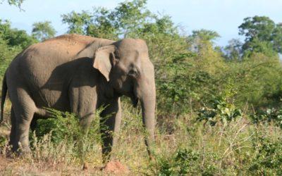 Cestopis Srí Lanka: Safari a moře
