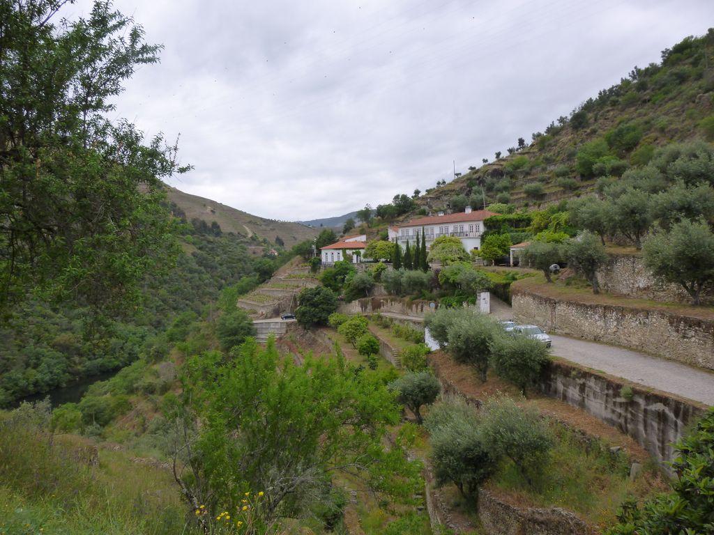 Jedna z vinic v oblasti Douro