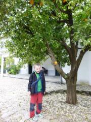 Krademe pomeranče:-)