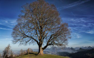 Štěstí a Ho'oponopono – úvaha