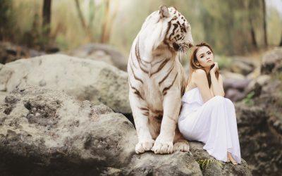 Tygr a liška